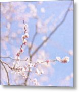 Winter Blossom Metal Print by Jill Ferry