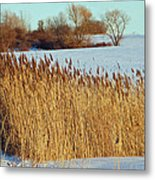 Winter Breeze Metal Print by Aimee L Maher Photography and Art Visit ALMGallerydotcom
