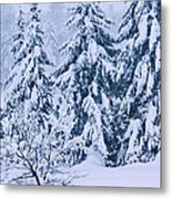 Winter Coat Metal Print by Aimelle