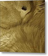 Winter Coat Metal Print