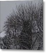 Winter Cold Branches Metal Print
