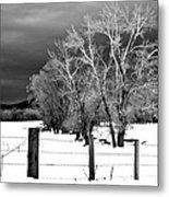 Winter Cottonwoods Metal Print