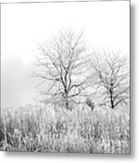 Winter Day Metal Print by Julie Palencia