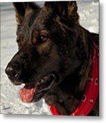 Winter Dog Metal Print