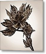 Winter Dormant Rose Of Sharon - S Metal Print