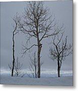 Winter Elegance Too Metal Print
