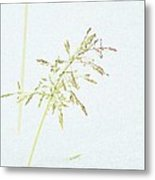 Winter Grass Metal Print