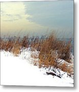 Winter Grasses In Snow Metal Print