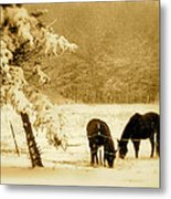 Winter Grazing Metal Print