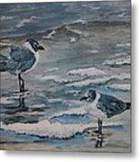 Winter Gulls Metal Print