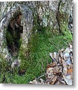 Winter Hide Away Metal Print