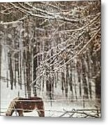Winter Scene With Horse Grazing In Wooded Pasture Metal Print