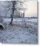 Winter Scene With Snow-covered Grasses Metal Print