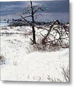 Winter Shenandoah National Park Metal Print by Thomas R Fletcher
