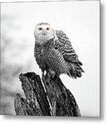 Winter Snowy Owls Metal Print