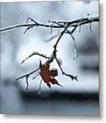 Winter Solo Metal Print