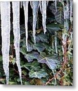 Winter Still Metal Print