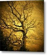 Winter Tree Metal Print by Joyce Kimble Smith