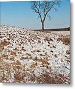 Winter Tree Nachusa Grasslands Metal Print