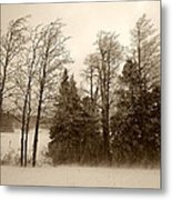 Winter Treeline Metal Print