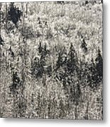 Winter Trees Covered In Ice Metal Print
