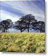 Winter Trees Metal Print