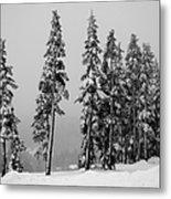 Winter Trees On Mount Washington - Bw Metal Print