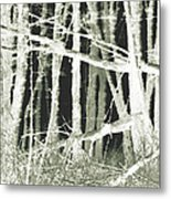 Winter Trees With Chalk Metal Print