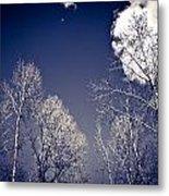 Winter Wonders Metal Print