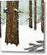 Wintering Pines Metal Print