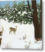 Wintering Whitetails Metal Print