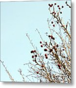 Winter's End Metal Print