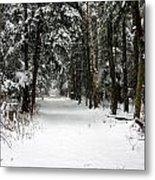 Winter's Path Metal Print