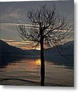 Wintertree In The Evening Metal Print