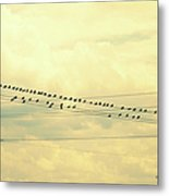 Wires With Many Birds On Them Metal Print