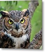 Wise Old Owl Metal Print
