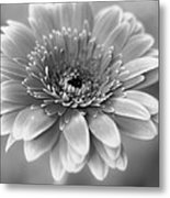 With A Little Luck Metal Print