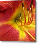 With Great Detail Metal Print