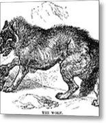 Wolf Attack Metal Print
