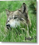 Wolf Laying In Grass Metal Print