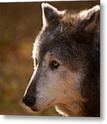 Wolf Outlined By The Sun Metal Print