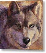 Wolf Study Metal Print