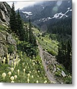 Woman Hiking On Sperry Chalet Trail Metal Print