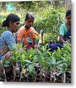 Women Grafting Mango Plants Metal Print by Johnson Moya