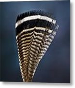 Wood Duck Feather Metal Print