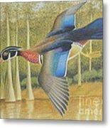 Wood Duck Flying Metal Print