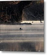 Wood Duck - On The Scenic Sucarnoochee River Metal Print