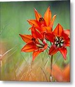 Wood Lily Metal Print