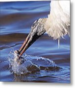 Wood Stork Fishing Metal Print