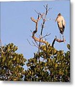 Wood Stork Out On A Limb Metal Print